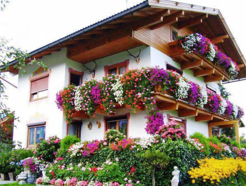 Plante decorative » Crestere si ingrijire » Udarea si fertilizarea florilor: reguli si sfaturi