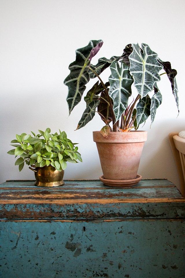 7 dintre cele mai frumoase plante de apartament de care nu ştiai