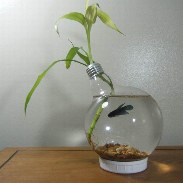 Mini acvariu