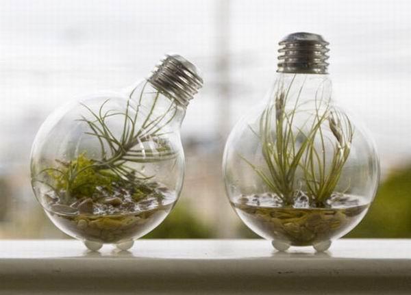 Terrarium cu plante