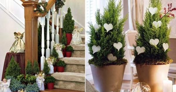 Decoreaz casa cu plante reprezentative pentru cr ciun Plante decorative