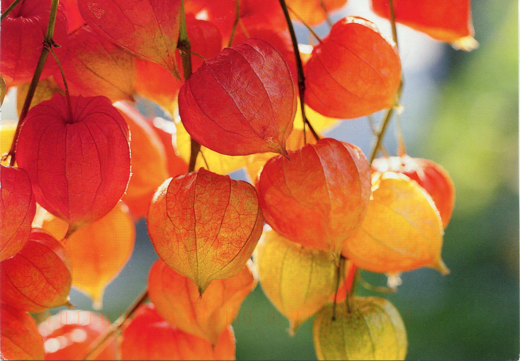 Cele mai frumoase flori de toamnă pentru grădină