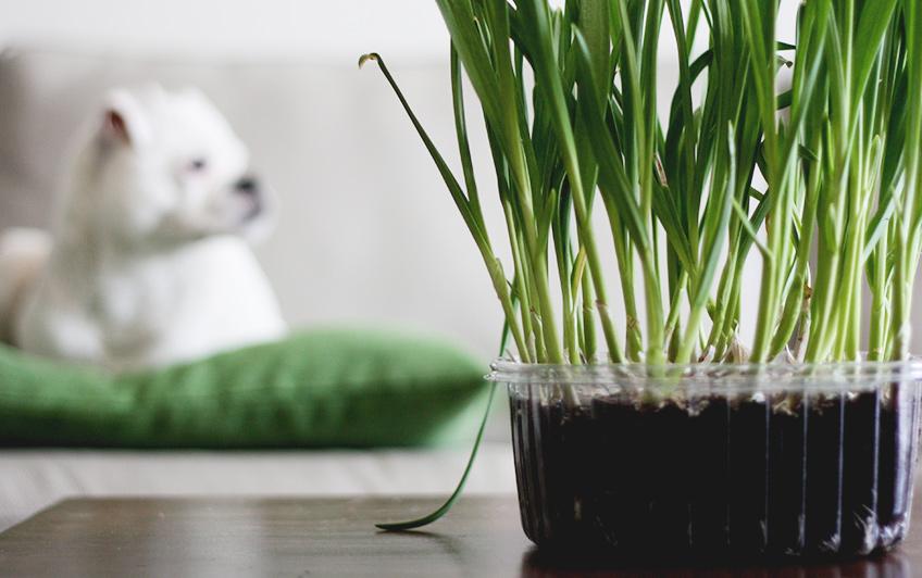Ce legume poţi creşte în apartament