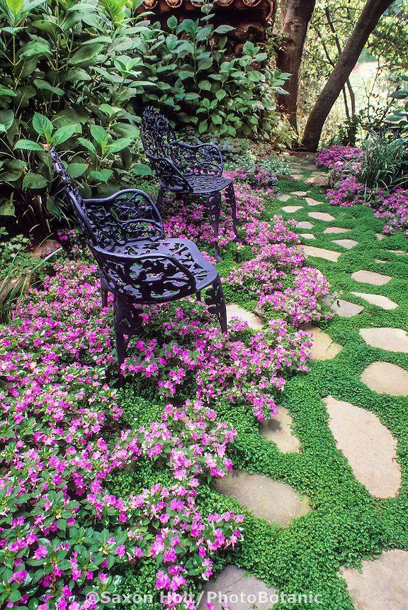 Plante decorative pentru alei de poveste Plante decorative