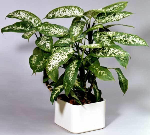 Plante care sunt periculoase pentru animalele de companie