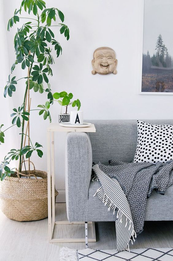 Zece arbori mari pe care îi poți crește în apartament