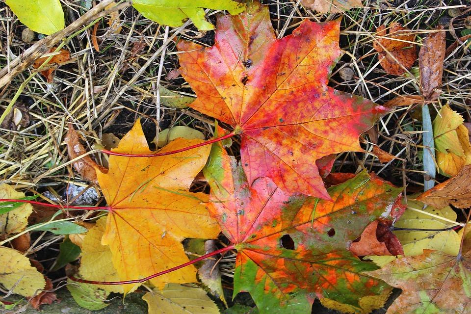 Cinci lucruri pe care le poţi face cu frunzele din grădină