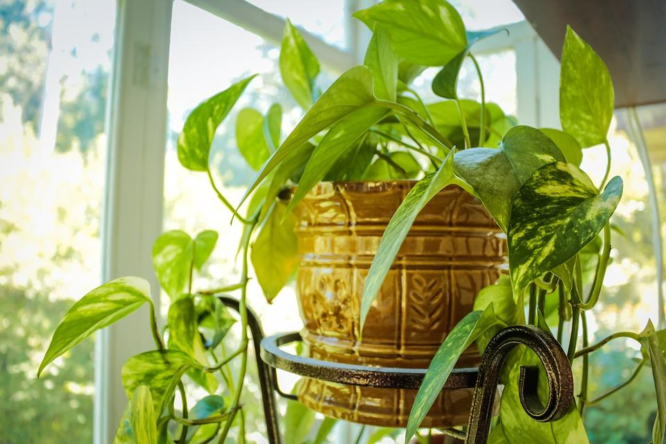 Zece trucuri pentru îngrijirea plantelor pe timp de iarnă