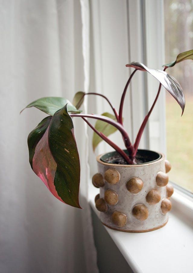 Tendinţele anului 2018 în materie de plante de interior