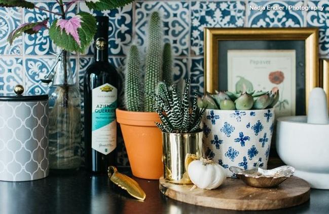 Cinci plante suculente pe care le poți crește în apartament