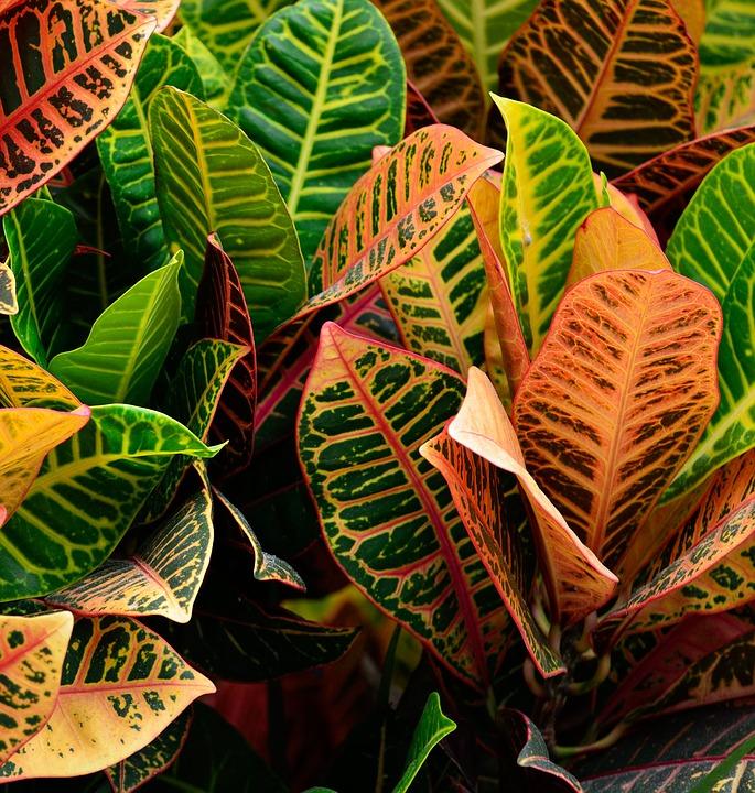 Cinci plante perfecte pentru camere și ferestre însorite